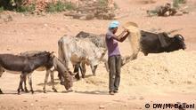Eritrea Landwirtschaft und Klimawandel Vieh