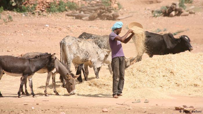 A farmer in Eritrea
