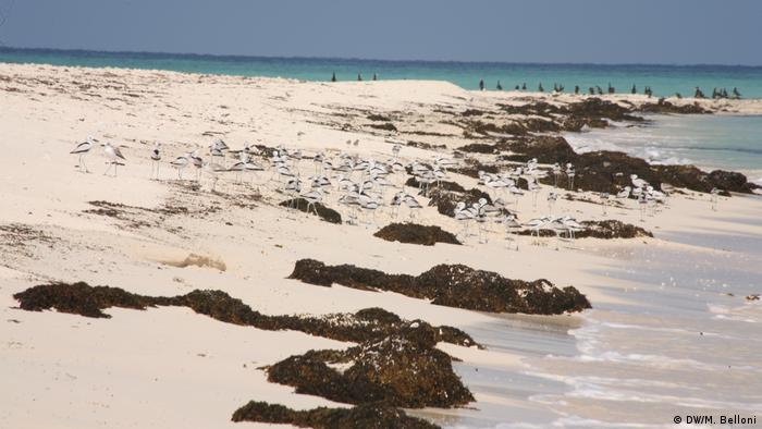White sandy beach dotted with seaweed