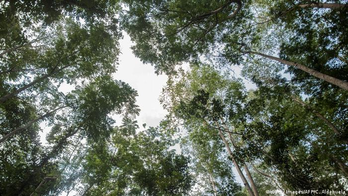 Ghana Atewa Forest | Kyebi Forest Reserve