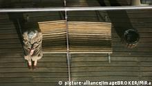 Eine alte Frau sitzt auf einer Bank und spiegelt sich in einem Gebaeude in Barcelona, Spanien, Europa   Verwendung weltweit, Keine Weitergabe an Wiederverkäufer.