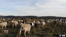 DW Sendung Eco Africa - Schafe in Südafrika, 2019