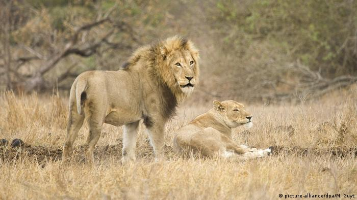South Africa: 14 lions on the loose near Kruger National