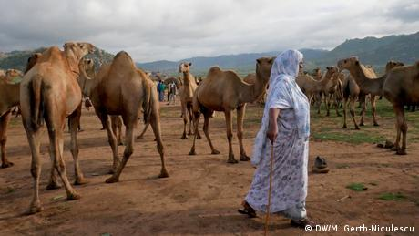 A woman walks past camels (DW/M. Gerth-Niculescu)