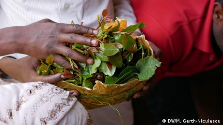 Hands holding a bundle of khat leaves (DW/M. Gerth-Niculescu)