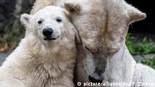 BdTD Tierpark Berlin | Eisbärenmutter Tonja und Tochter Hertha