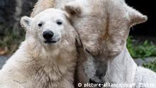 Deutschland Sommer im Tierpark BdT