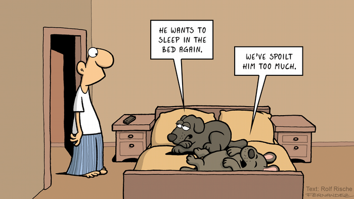 Fernandez cartoon: two dogs in a bed talk about their master being spoiled