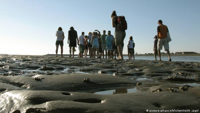 A group wading in the mudflats of the Wadden Sea (picture-alliance/blickwinkel/A. Jagel)