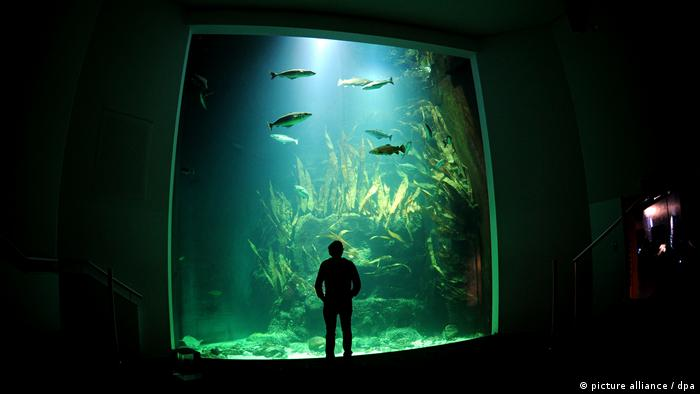 Person standing in front of a giant aquarium in the Multimar Wattforum in Tönning (picture alliance / dpa)