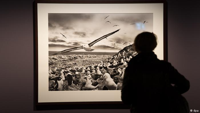 image of sea birds was shown as part of a Genesis exhibition at C/O Berlin in 2015. (dpa)