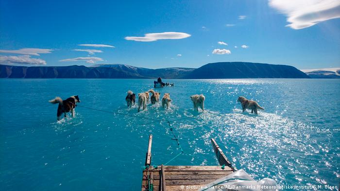 Dogs dragging a sled through melted ice in Greenland