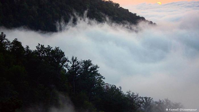 Hycranischer Wald im Nebel, Iran (Komeil Ghasempour )