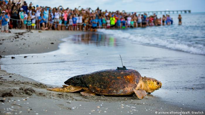 BdTD Schildkröte (picture-alliance/dpa/R. Graulich)