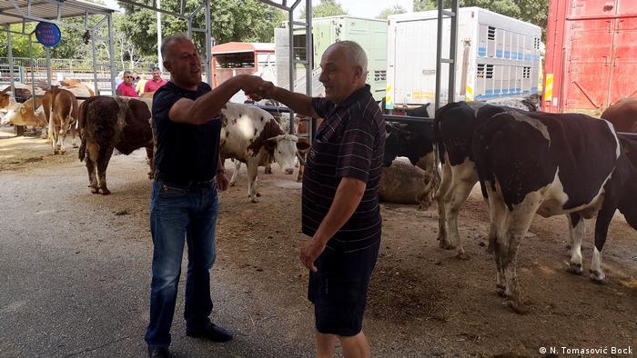 Prodaja stoke u Zadvarju (N. Tomasović Bock)