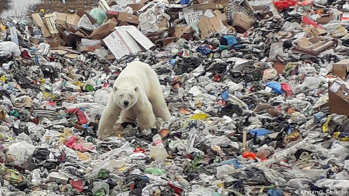 A stray polar bear is seen on a garbage dump at the industrial city of Norilsk, Russia June 18, 2019. (Reuters/Y. Chvanov)