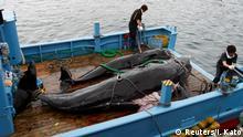 Japan Wal als Nahrungsmittel