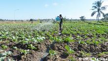 Agricultura urbana em Maputo: um modelo a ser seguido