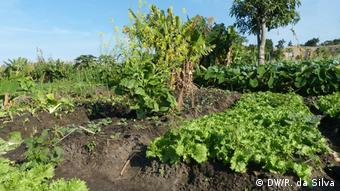 Mosambik Urbane Landwirtschaftin Maputo