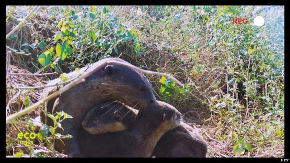 Exploring Goa's otter side