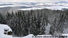 Snow-capped trees in the Erzgebirge (picture-alliance/dpa/H. Schmidt)
