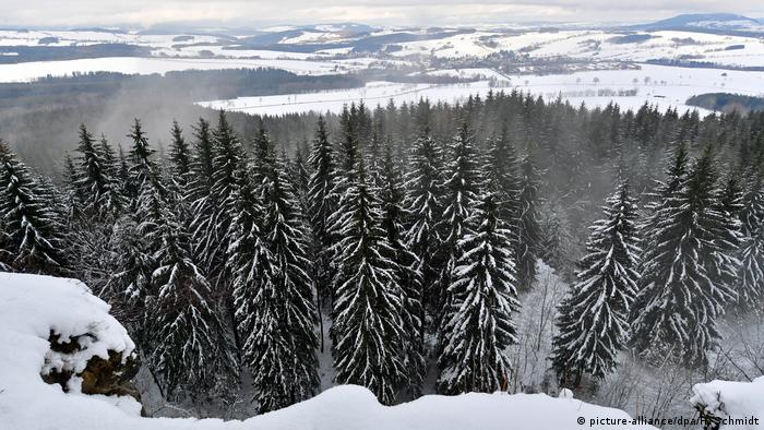 Snow-capped trees in the Erzgebirge