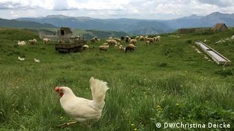 Animals in the Durmitor Mountains in Montenegro