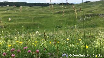 A high meadow in the Durmitor Mountains