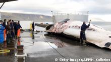 Island 2009 | Walfang, Wal auf Schiff in Reykjavik