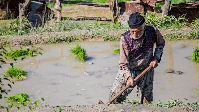 A farmer working in a flooded field