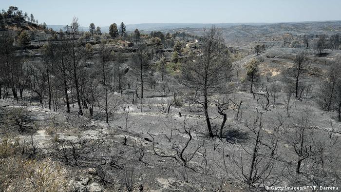 Наслідки лісової пожежі в Каталонії