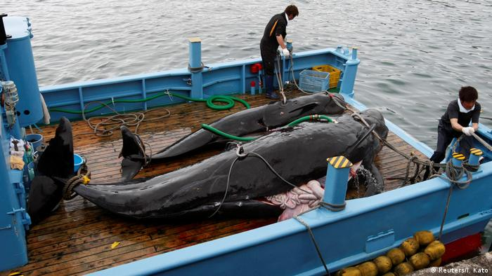 Earlier this year Japan caused a global outcry by restarting commercial whaling