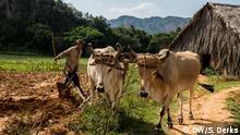 Kuba Tabak-Farmen in Vinales