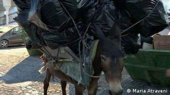 Στη Σαντορίνη τα γαϊδουράκια μεταφέρουν και βαριά φορτία ή σκουπίδια