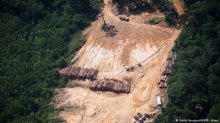 Brasilien Regenwald Abholzung