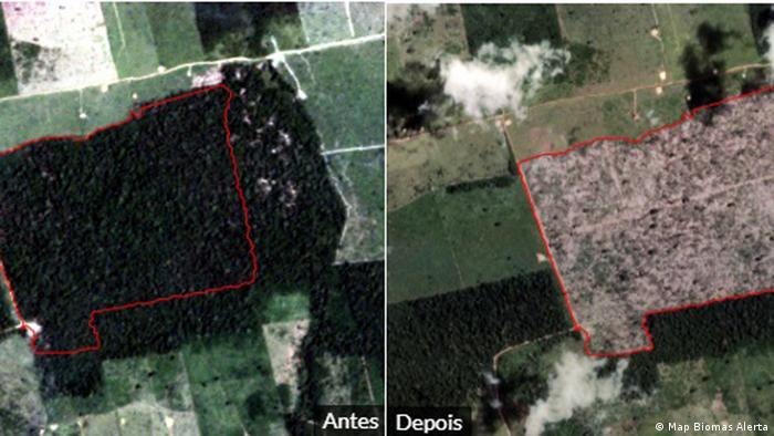 Imagens de satélite mostram avanço do desmatamento entre novembro de 2018 e março de 2019
