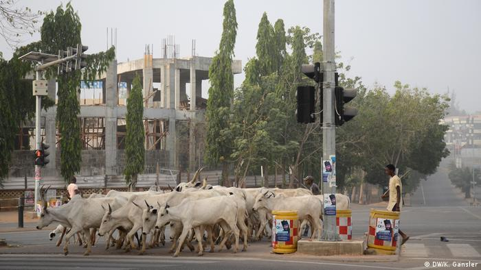 Herders walk with their cattle along a main road in Abuja