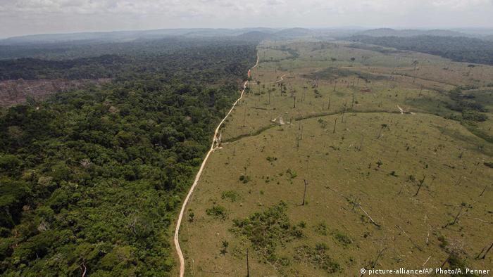 Brezilya'da yağmur ormanlarındaki tahribat