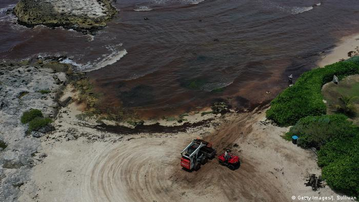 Seaweed washes up on Mexican beach