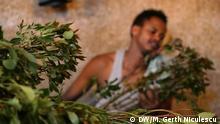 Khat Anbau und Vertrieb Äthiopien