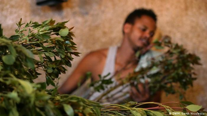 Khat leaves in the foreground, a blurred khat worker in the background (DW/M. Gerth Niculescu )