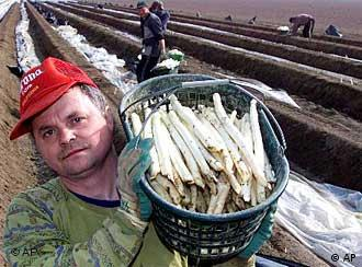 Beelitz's asparagus farmers prefer Poles