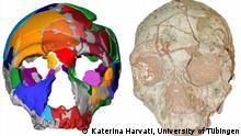 Homo Sapiens | Griechenland | Apidima