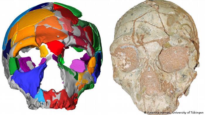 The skull fragment Apidima 2 and a computer model Apidima 2 (Katerina Harvati, University of Tübingen)