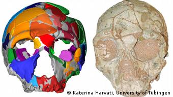 O crânio de Apidima 2 (dir.) e sua reconstrução (esq.) mostram que tinha características de Neandertal