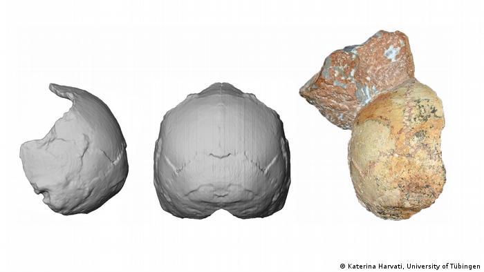Schädel vom Homo Sapiens aus Apidima, Griechenland