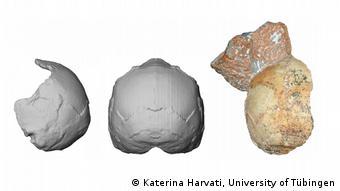 بازسازی جمجمه انسانی که ۲۱۰ هزار سال پیش زندگی میکرده است