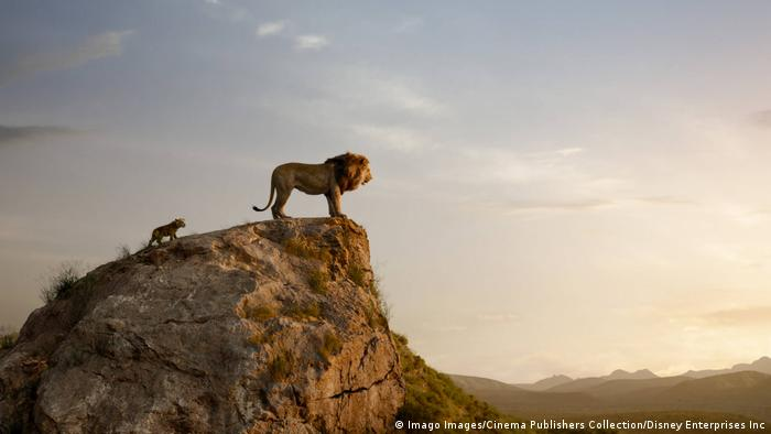 Lion on a bluff overlooking a vast landscape, followed by a cub