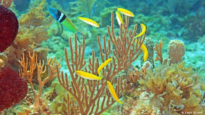 Fische ändern ihr Geschlecht