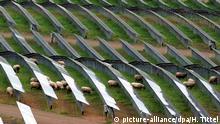 ARCHIV- Schafe grasen am 08.05.2009 in Föhren (Kreis Trier-Saarburg) zwischen Modulen des größten Solarkraftwerks in Rheinland-Pfalz (Foto vom 08.05.2009). Die Bauern in Rheinland-Pfalz fürchten starke Einschnitte durch die EU-Agrarreform und durch den Bau von Anlagen für erneuerbare Energien. Ein Dorn im Auge ist ihnen vor allem ein Vorschlag der EU-Kommission, wonach sieben Prozent ihrer Äcker und Wiesen zu ökologischen Ausgleichsflächen werden sollen, damit sie volle Direktzahlungen bekommen. Foto: Harald Tittel dpa/lby (zu dpa lrs-Gespräch: «Bauern wehren sich gegen Verlust landwirtschaftlicher Flächen» vom 07.09.2012) +++(c) dpa - Bildfunk+++ | Verwendung weltweit